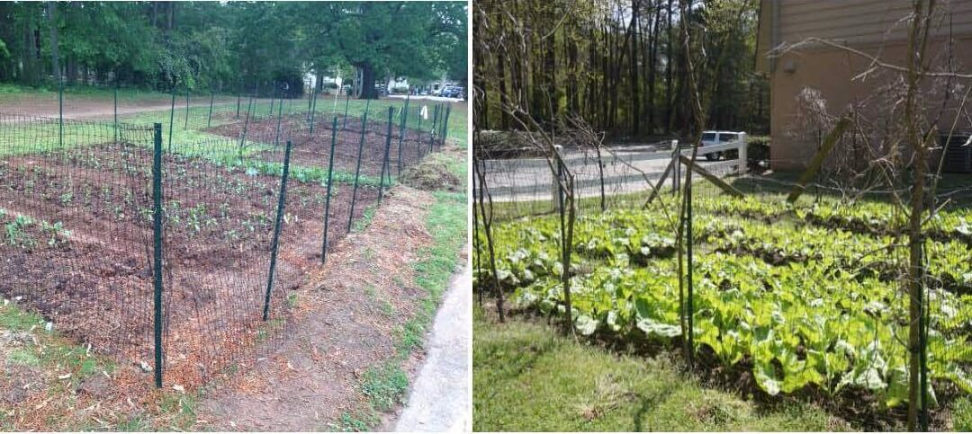 It's Garden time at Willow Branch!